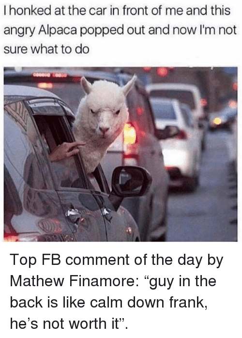 """Alpaca: I honked at the car in front of me and this  angry Alpaca popped out and now I'm not  sure what to do Top FB comment of the day by Mathew Finamore: """"guy in the back is like calm down frank, he's not worth it""""."""
