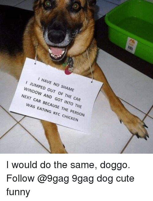 9gag, Cute, and Funny: I i HAVE NO JUMPED  SHAME  OUT oF THE  CAR  NEXT AND  CAR BECAUSE INTO THE  WAS  THE PERSON  KFC I would do the same, doggo. Follow @9gag 9gag dog cute funny