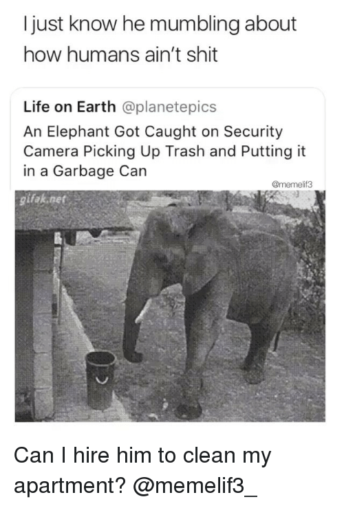 Gifak: I just know he mumbling about  how humans ain't shit  Life on Earth @planetepics  An Elephant Got Caught on Security  Camera Picking Up Trash and Putting it  in a Garbage Can  @memelif3  gifak net Can I hire him to clean my apartment? @memelif3_