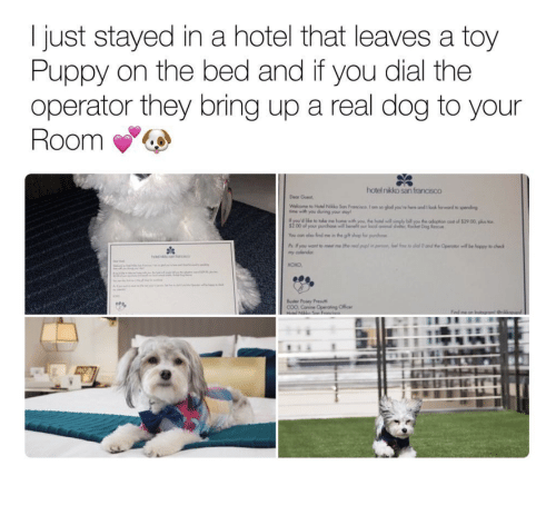 Justdial Hotels: 25+ Best Memes About Nikko