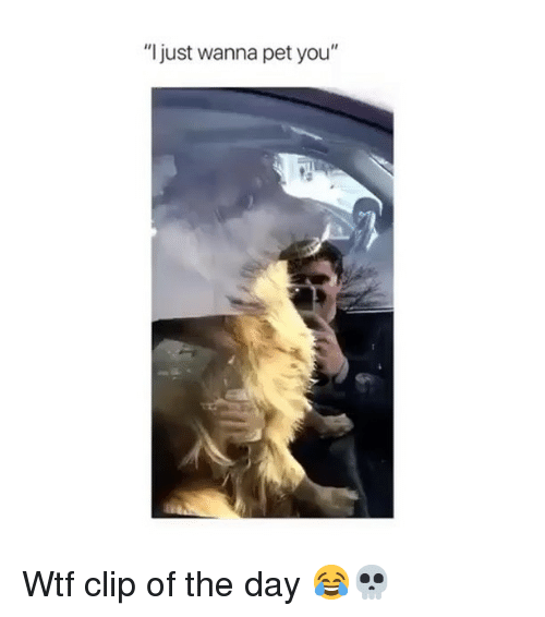 "Funny, Wtf, and Pet: ""I just wanna pet you"" Wtf clip of the day 😂💀"