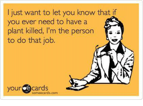 Memes, Ecards, and Jobs: I just want to let you know that if  you ever need to have a  plant killed, I'm the person  to do that job.  your e some ecards com  Cards