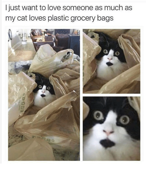 Love, Memes, and 🤖: I just want to love someone as much as  my cat loves plastic grocery bags  0  0