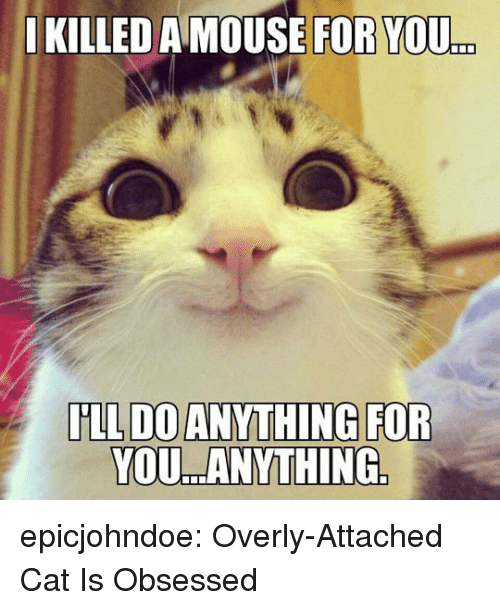 Overly Attached: I  KILLED A MOUSE FOR YOU  .  YOU ANYTHING epicjohndoe:  Overly-Attached Cat Is Obsessed