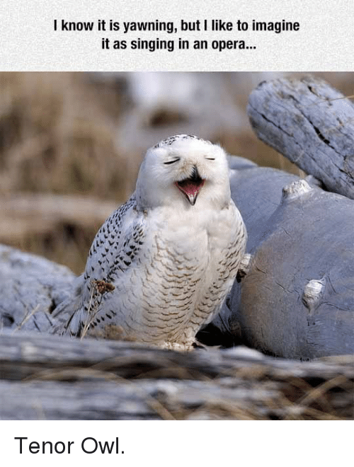tenor: I know it is yawning, but I like to imagine  it as singing in an opera... <p>Tenor Owl.</p>