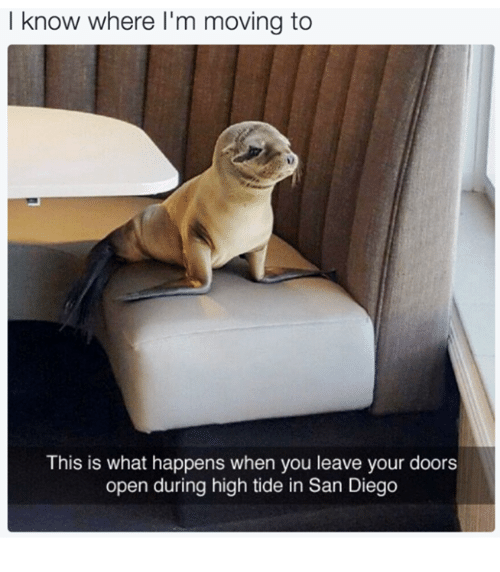 Dank, San Diego, and 🤖: I know where I'm moving to  This is what happens when you leave your doors  open during high tide in San Diego