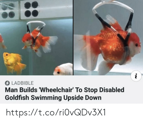 Disabled: i  LADBIBLE  Man Builds 'Wheelchair' To Stop Disabled  Goldfish Swimming Upside Down https://t.co/ri0vQDv3X1