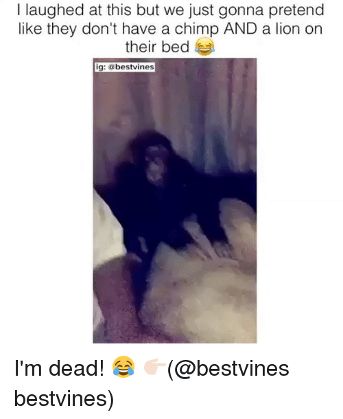 Chimp: I laughed at this but we just gonna pretend  like they don't have a chimp AND a lion on  their bed  ig: @bestvines I'm dead! 😂 👉🏻(@bestvines bestvines)
