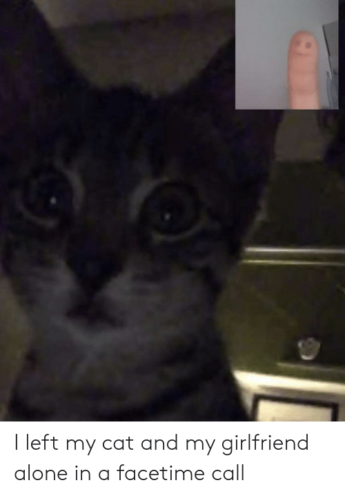 Facetime: I left my cat and my girlfriend alone in a facetime call