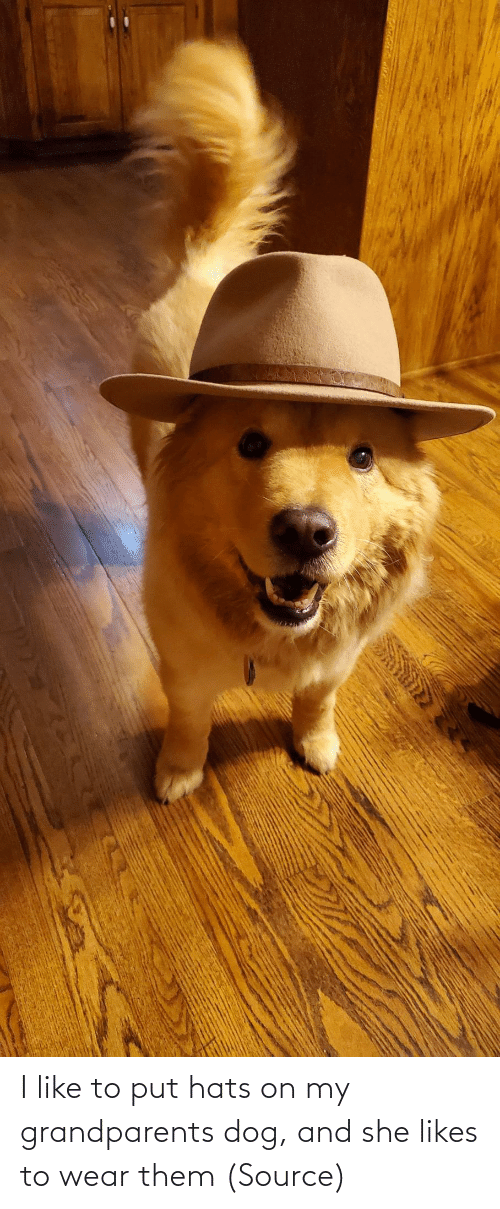Dog: I like to put hats on my grandparents dog, and she likes to wear them (Source)