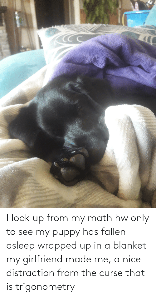blanket: I look up from my math hw only to see my puppy has fallen asleep wrapped up in a blanket my girlfriend made me, a nice distraction from the curse that is trigonometry