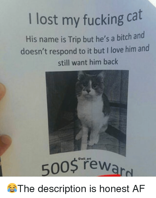 Af, Bitch, and Fucking: I lost my fucking cat  His name is Trip but he's a bitch and  doesn't respond to it but I love him and  still want him back  @will ent  5005 Tewaro 😂The description is honest AF