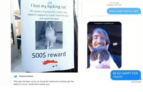 Bitch, Fucking, and Love: I lost my fucking cat  His name is Trip but he's a bitch and  doesn't respond to it but I love him and  still want him back  Today 3:07PM  Did u ever find ur cat?  FOUND MY FUCKONG CAT  500$ reward  IM SO HAPPY FOR  YOU!!!!  This sign has been up by my house for weeks and curlosity got the  better of me so i texted the number and