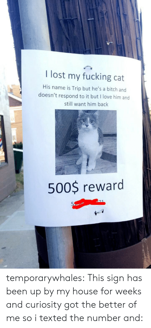 texted: I lost my fucking cat  His name is Trip but he's a bitch and  doesn't respond to it but I love him and  still want him bachk  500$ reward temporarywhales: This sign has been up by my house for weeks and curiosity got the better of me so i texted the number and: