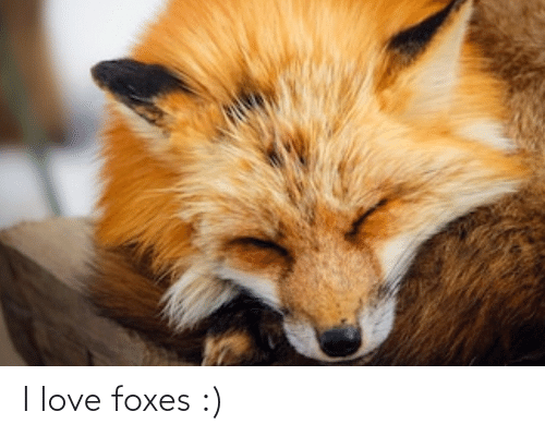 foxes: I love foxes :)