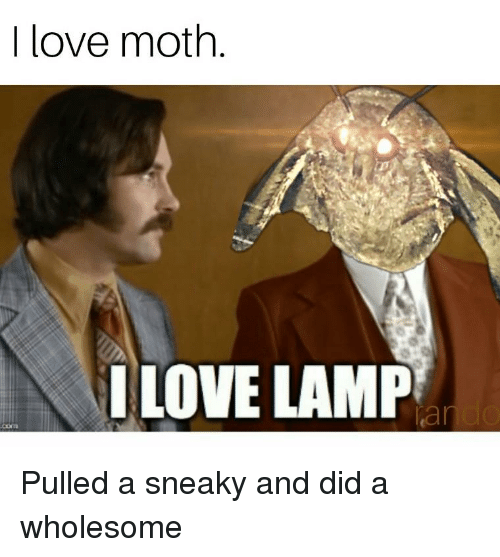 Funny, Love, and Wholesome: I love moth  I LOVE LAMP