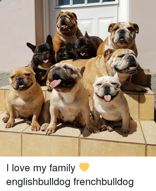 Love My Family: I love my family 💛 englishbulldog frenchbulldog