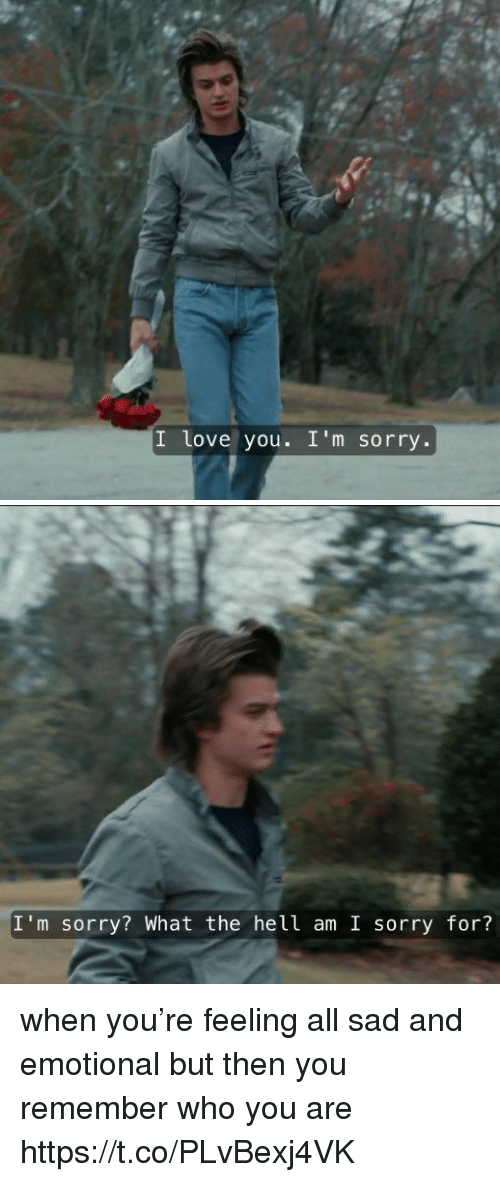 Love, Memes, and Sorry: I love you. I'm sorry.   I'm sorry? What the hell am I sorry for? when you're feeling all sad and emotional but then you remember who you are https://t.co/PLvBexj4VK