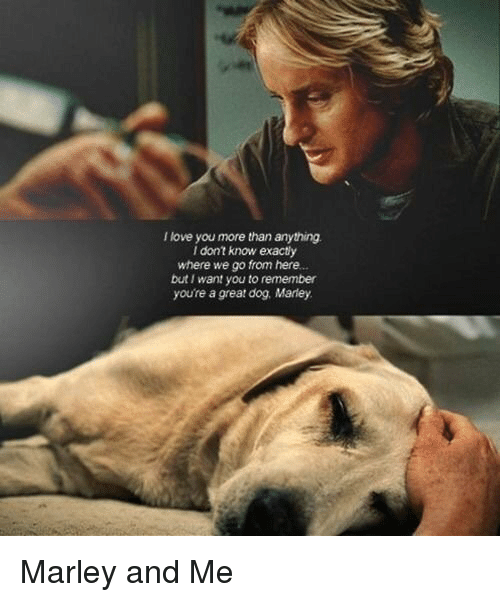 I Love You More Meme: 25+ Best Memes About Marley And Me