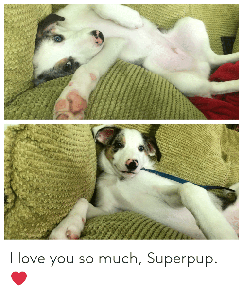 love you so much: I love you so much, Superpup. ❤️