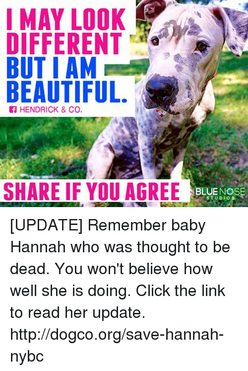 Baby, It's Cold Outside: I MAY LOOK  DIFFERENT  AM  BUT I AM  BEAUTIFUL.  f HENDRICK & Co.  SHARE IF YOU AGREE  BLUE NOSE  STUDIO [UPDATE] Remember baby Hannah who was thought to be dead. You won't believe how well she is doing. Click the link to read her update. ► http://dogco.org/save-hannah-nybc