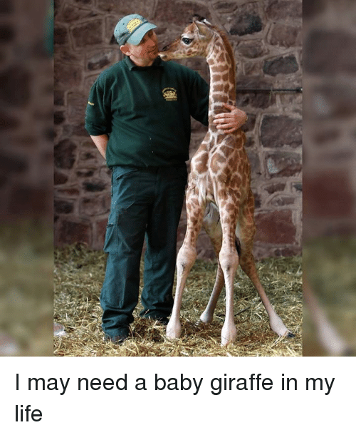 baby giraffe: I may need a baby giraffe in my life