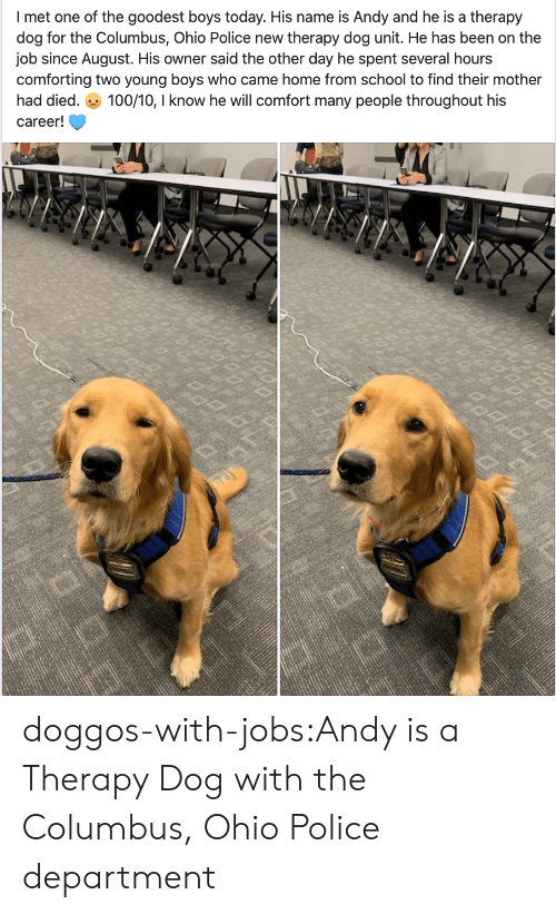 police department: I met one of the goodest boys today. His name is Andy and he is a therapy  dog for the Columbus, Ohio Police new therapy dog unit. He has been on the  job since August. His owner said the other day he spent several hours  comforting two young boyss who came home from school to find their mother  100/10, I know he will comfort many people throughout his  had died.  career! doggos-with-jobs:Andy is a Therapy Dog with the Columbus, Ohio Police department