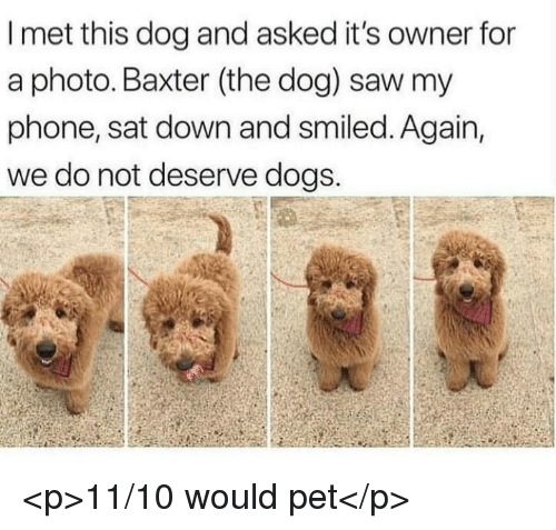 baxter: I met this dog and asked it's owner for  a photo. Baxter (the dog) saw my  phone, sat down and smiled. Again,  we do not deserve dogs. <p>11/10 would pet</p>