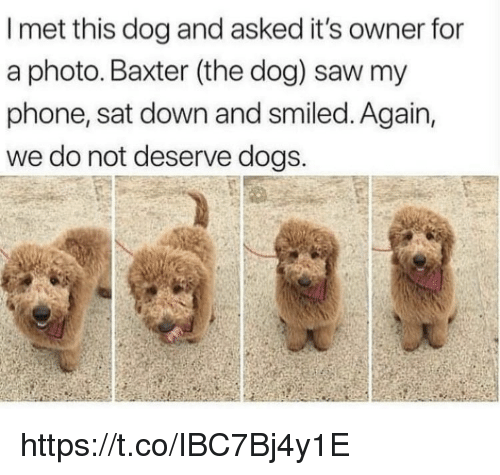 baxter: I met this dog and asked it's owner for  a photo. Baxter (the dog) saw my  phone, sat down and smiled. Again,  we do not deserve dogs. https://t.co/IBC7Bj4y1E