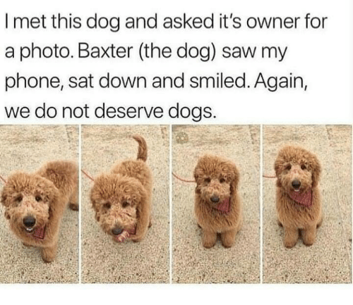 baxter: I met this dog and asked it's owner for  a photo. Baxter (the dog) saw my  phone, sat down and smiled. Again,  we do not deserve dogs.