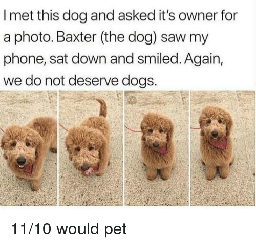 baxter: I met this dog and asked it's owner for  a photo. Baxter (the dog) saw my  phone, sat down and smiled. Again,  we do not deserve dogs. 11/10 would pet