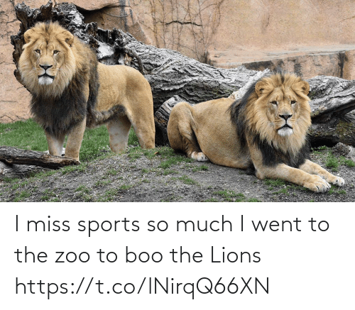 I Miss: I miss sports so much I went to the zoo to boo the Lions https://t.co/lNirqQ66XN