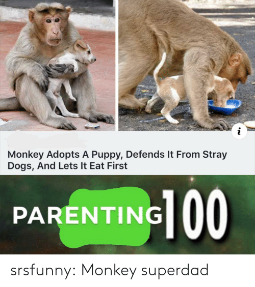 stray dogs: i  Monkey Adopts A Puppy, Defends It From Stray  Dogs, And Lets It Eat First  PARENTING srsfunny:  Monkey superdad