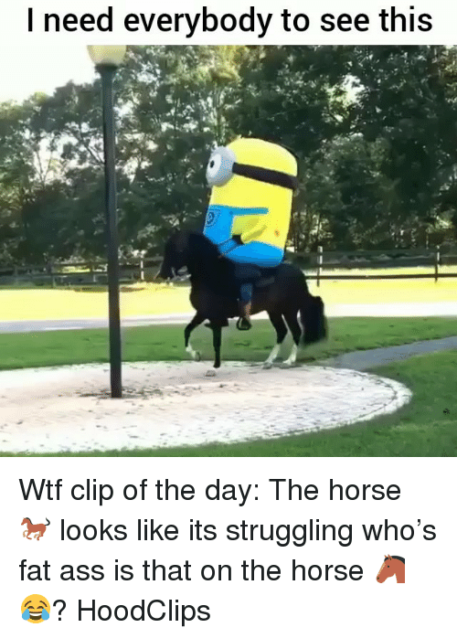 Ass, Fat Ass, and Funny: I need everybody to see this Wtf clip of the day: The horse 🐎 looks like its struggling who's fat ass is that on the horse 🐴 😂? HoodClips