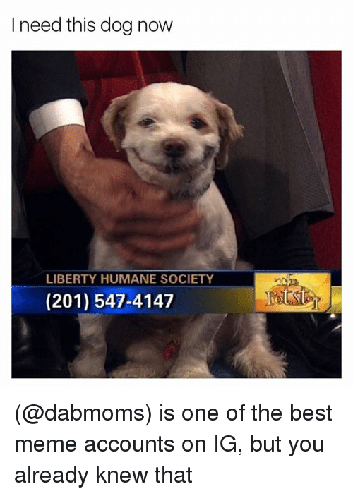 Funny, Meme, and Humane Society: I need this dog now  LIBERTY HUMANE SOCIETY  (201) 547-4147 (@dabmoms) is one of the best meme accounts on IG, but you already knew that