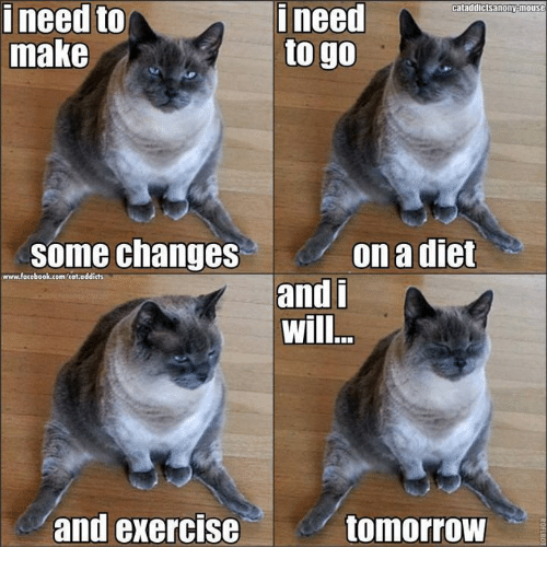 Funny Diet Memes Of 2017 On SIZZLE