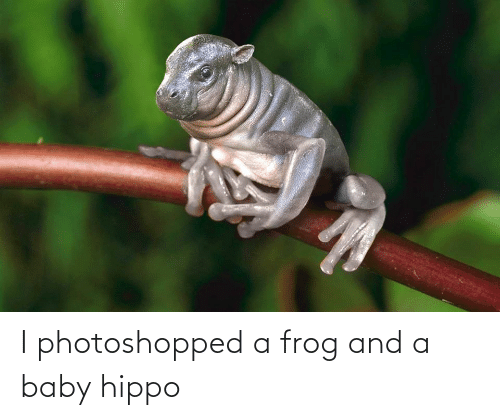 Baby, Baby Hippo, and Frog: I photoshopped a frog and a baby hippo