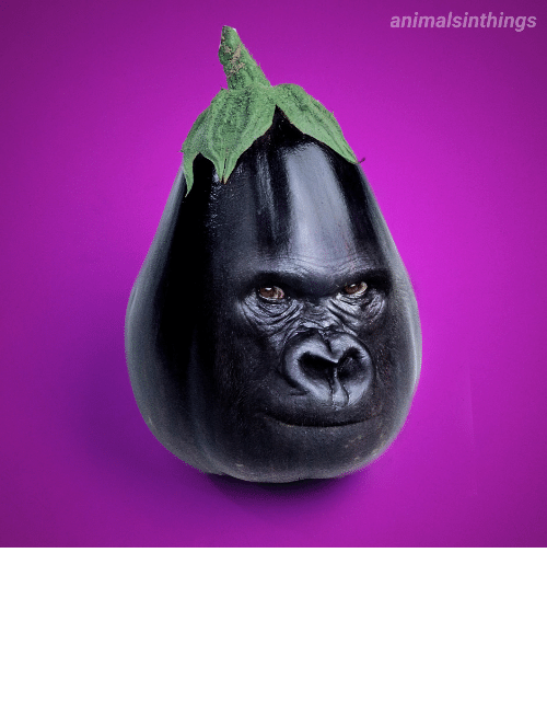photoshopped: I photoshopped a Gorilla into an Eggplant for your viewing pleasure.