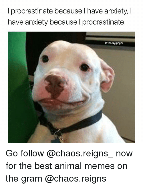 Animated Memes: I procrastinate because have anxiety, I  have anxiety because I procrastinate  @thedryginger Go follow @chaos.reigns_ now for the best animal memes on the gram @chaos.reigns_