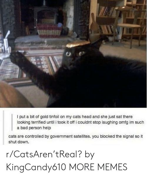 Signal: I put a bit of gold tinfoil on my cats head and she just sat there  looking terrified until i took it off i couldnt stop laughing omfg im such  a bad person help  cats are controlled by government satellites. you blocked the signal so it  shut down. r/CatsAren'tReal? by KingCandy610 MORE MEMES