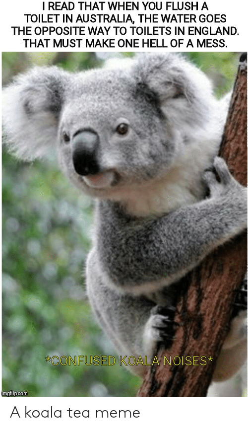 Tea Meme: I READ THAT WHEN YOU FLUSH A  TOILET IN AUSTRALIA, THE WATER GOES  THE OPPOSITE WAY TO TOILETS IN ENGLAND  THAT MUST MAKE ONE HELL OF A MESS.  CONFUSED KOALA NOISES*  imgflip.com A koala tea meme
