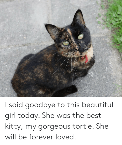 beautiful girl: I said goodbye to this beautiful girl today. She was the best kitty, my gorgeous tortie. She will be forever loved.