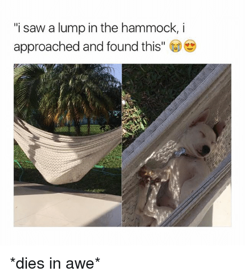 """aweful: """"i saw a lump in the hammock, i  approached and found this"""" *dies in awe*"""