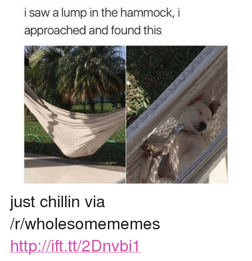 """Hammock: i saw a lump in the hammock, i  approached and found this <p>just chillin via /r/wholesomememes <a href=""""http://ift.tt/2Dnvbi1"""">http://ift.tt/2Dnvbi1</a></p>"""