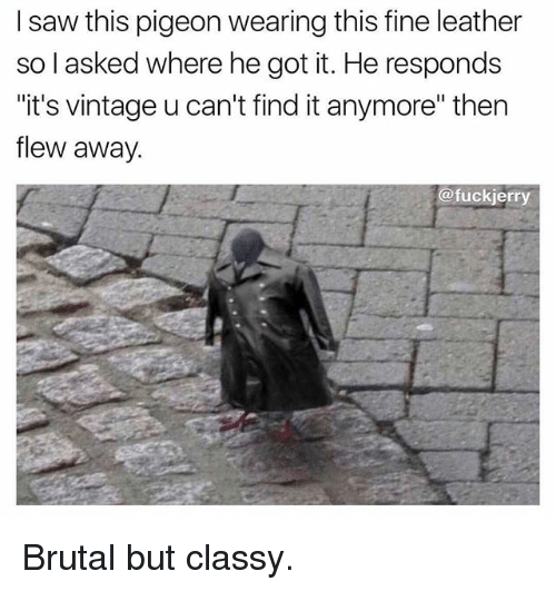 """Fuckjerry: I saw this pigeon wearing this fine leather  so l asked where he got it. He responds  """"it's vintage u can't find it anymore"""" then  flew away.  @fuckjerry Brutal but classy."""