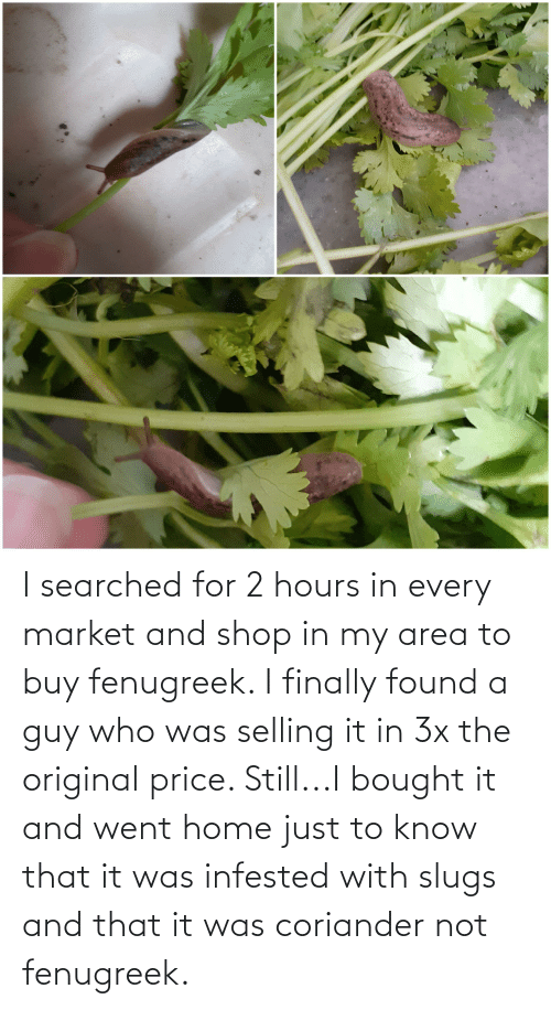 Area: I searched for 2 hours in every market and shop in my area to buy fenugreek. I finally found a guy who was selling it in 3x the original price. Still...I bought it and went home just to know that it was infested with slugs and that it was coriander not fenugreek.