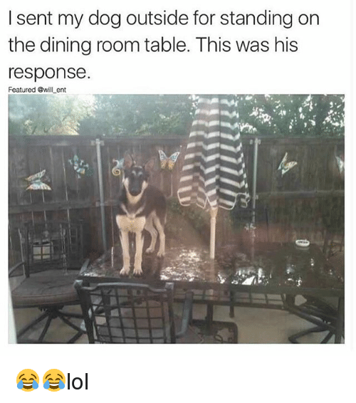 Memes, 🤖, and Dog: I sent my dog outside for standing on  the dining room table. This was his  response.  Featured @will ent 😂😂lol