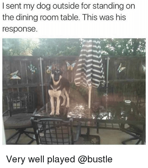 Memes, 🤖, and Dog: I sent my dog outside for standing on  the dining room table. This was his  response Very well played @bustle