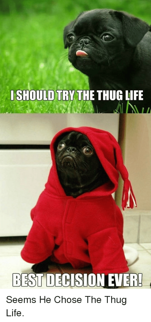 thug: I SHOULD TRY THE THUG LIFE  BEST DECISION EVER! <p>Seems He Chose The Thug Life.</p>