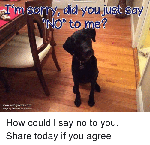 "Memes, Sorry, and Today: I  Sorry, did you-just say  NO"" to me?  www.adogslove.com  mage by Deborah Rjoux Brown How could l say no to you. Share today if you agree"
